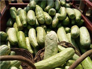 各种蔬菜瓜果