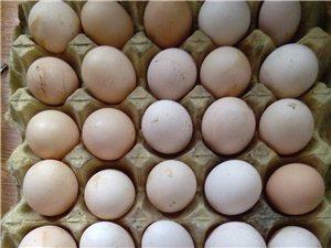 林園走地雞及雞蛋專賣