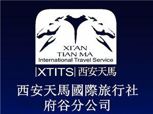 天马国际旅行社