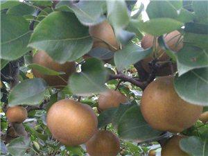 百里洲黄花梨出售