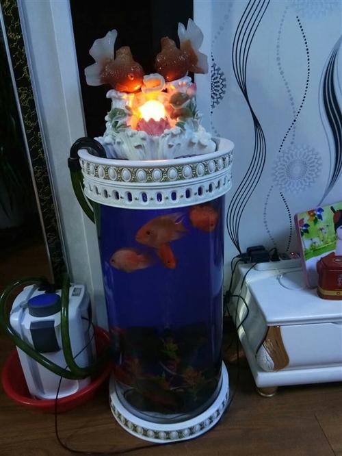 閑置魚缸便宜出售