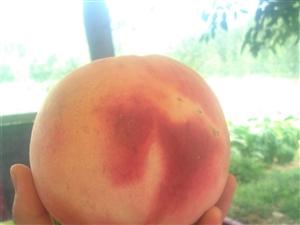 纯天然无公害桃子