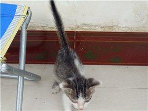 小奶猫两个月大