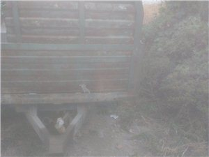出售自卸拖拉机车箱
