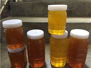 家有自养蜂蜜大量出售批发