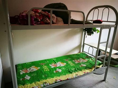 上下鋪鐵制新床