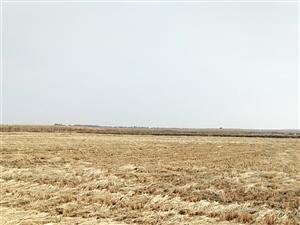 有十八垧水稻田出租出售。连片地拉林河水:浇灌