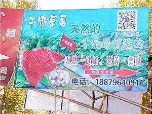 岷县草莓采摘园