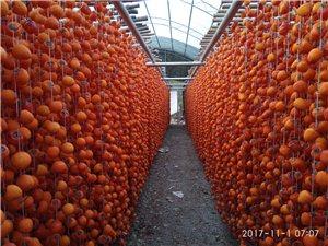 柿餅銷售批發零售