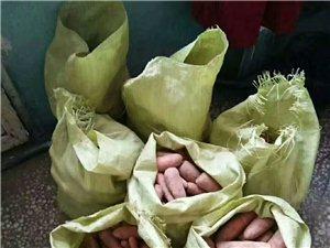 無化肥的綠色胡蘿卜出售