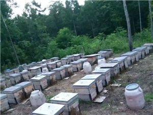 常年批发零售蜂蜜