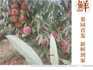 冬季桃树修剪服务