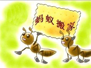 宿州蚂蚁搬家