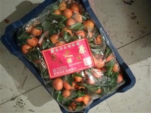 水果批发零售沙糖桔