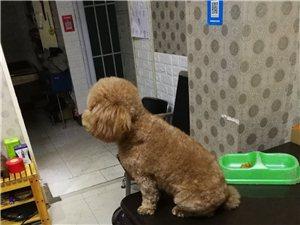 小狗在武陟浮桥丢失着急寻找