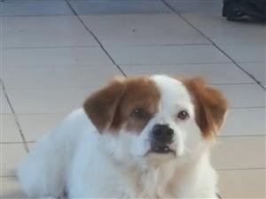 寻找一只养了十年的小狗