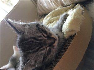找一个真心爱猫的人