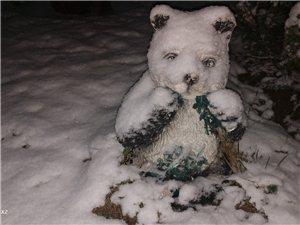 2020年的第一场雪,比去年来的晚了一些