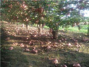 風雨過后的果園