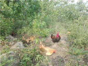 綠色生態-杏苑農家樂