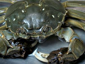 批发零售螃蟹自产自销