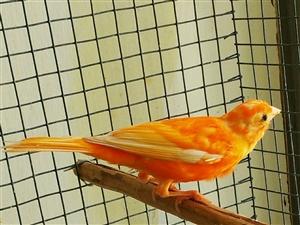 出几个自养的小鸟