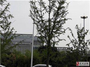 青州火车站的镁光灯开关坏了吗?