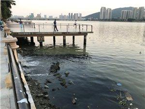 前山河白石�蚋浇�出水口流出漆黑的污水