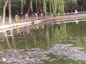 人工湖泊及时清理(人民公园)