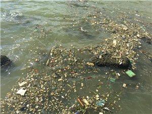 珠海�矍猷]局和德翰大酒店附近海面垃圾成片