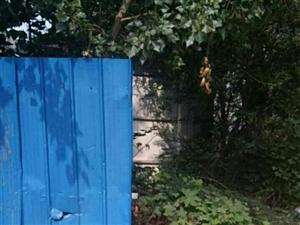 澳门金沙网址站创卫死角之月儿湾小区