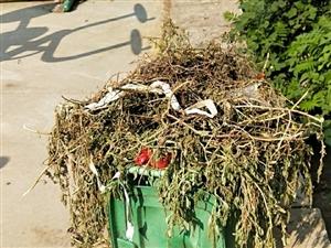 长岭垃圾清运公司