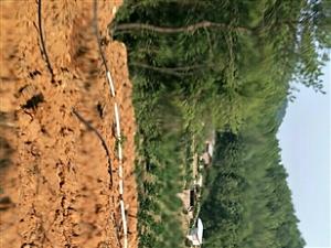 2019江西省�M州市于都�h禾�S�金盆村樟木坑Hua