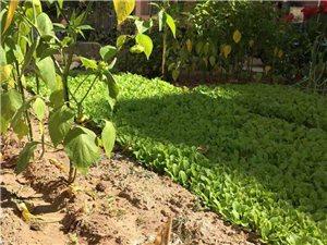 建平顺和家园  有人占用绿化地自己种菜  不小心踩了骂骂咧咧