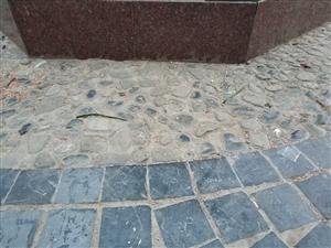 溜娃的家长注意了,盛世广场前面小树林有露天散落的鼠药