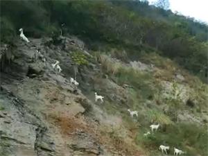 这样放羊好吗