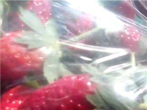奶油草莓上市了