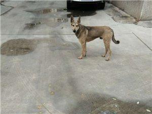 这是谁家的狗狗