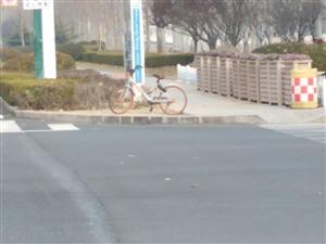 """""""共享单车""""很孤独!"""