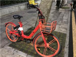 你知道这是哪款共享单车吗?