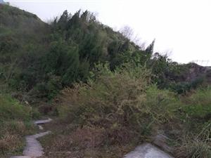 武陵山机场外边居民行走的道路实在不堪