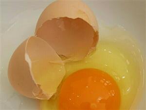 大山沟里自产自销土鸡蛋