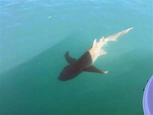 澳夫妇航船周围惊现鲨鱼和鳄鱼