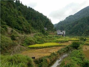 走向荒芜的村庄