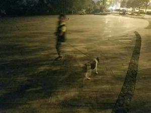 狗狗走丢了