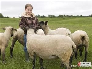羊在山坡�癫缓冢��i在圈里捂不白