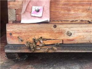 唯蜜蜂与蜂蜜不可辜负也