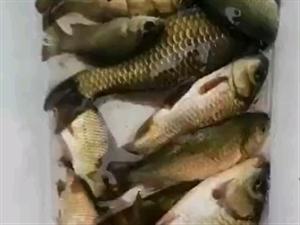 寻找渔友微信群