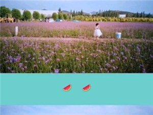 湿地公园薰衣草庄园。