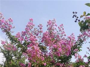 周恩来纪念园(滨州)盛夏之景